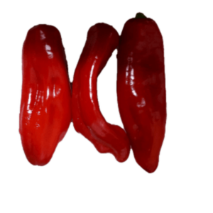 Sheppard Pepper